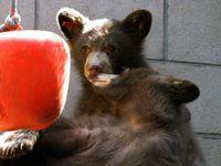 LTWC_Bears_071410_1