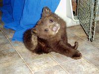 Baby+bear+049_sm