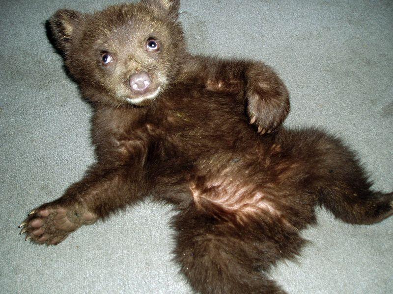 Baby+bear+078_sm