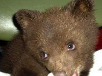 Baby+bear+121_sm